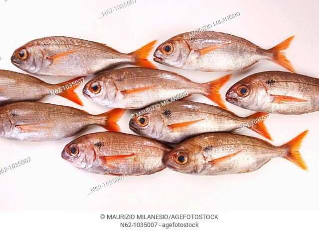 Sea fish on the white table put online as a group of fish that swims