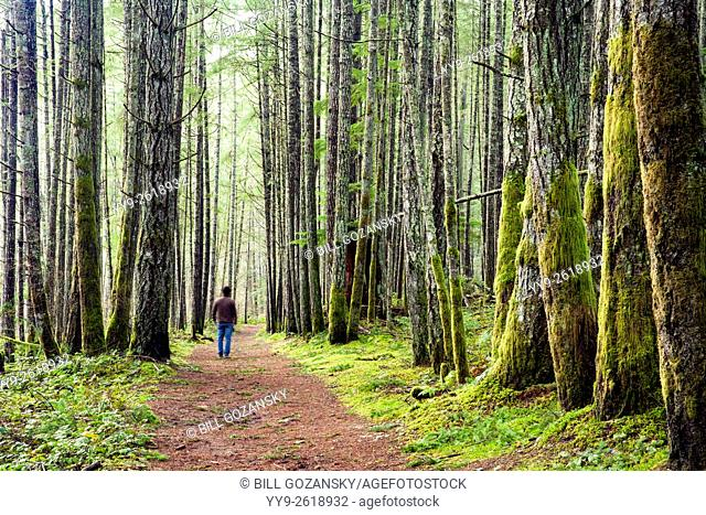 Forest Trail in Duncan, Vancouver Island, British Columbia, Canada