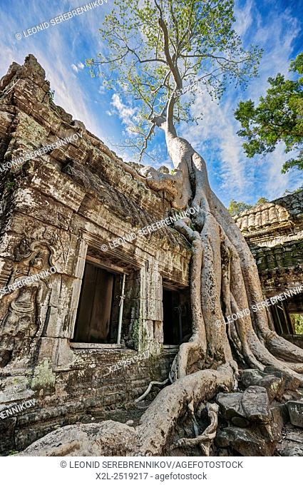Ta Prohm temple. Angkor Archaeological Park, Siem Reap Province, Cambodia