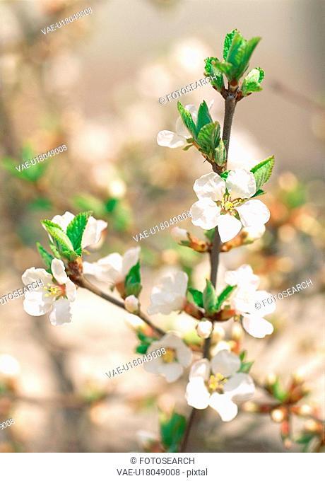 plants, nature, spring, flower, plant, film