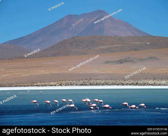 Bolivia, Lipez Desert, Laguna Verde