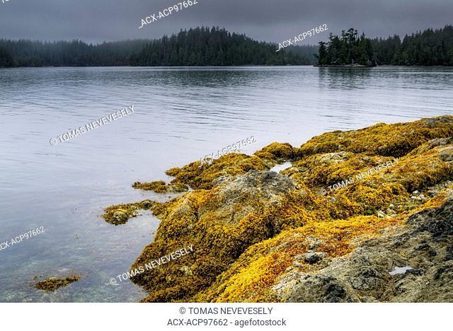 Broken Group Islands, Pacific Rim National Park, Vancouver Island, British Columbia, Canada