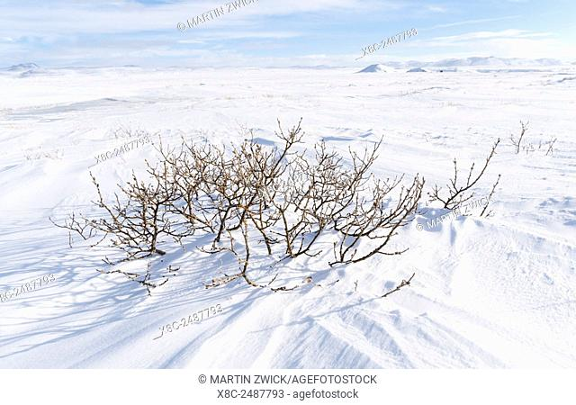 Landscape near river Joekulsa a Fjoellum during winter in the highland of Iceland. europe, northern europe, iceland, February