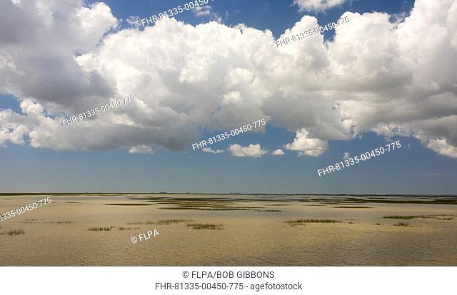 View over saline marshland, The Marismas, Coto Donana N P , Andalucia, Spain