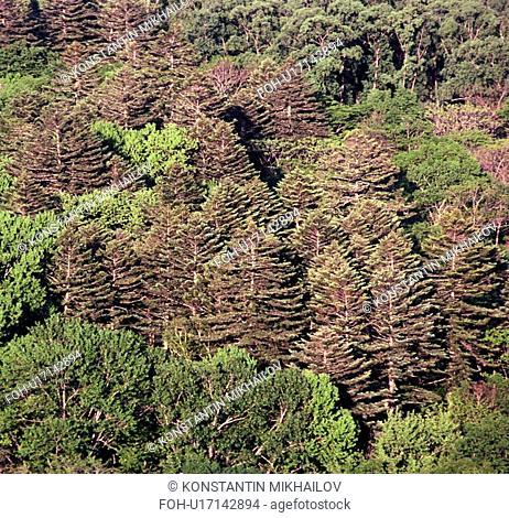 Far East, Siberia, background, fir, forest, forestland, landscape