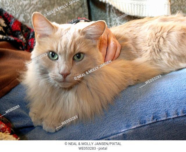 Hand resting on Cat