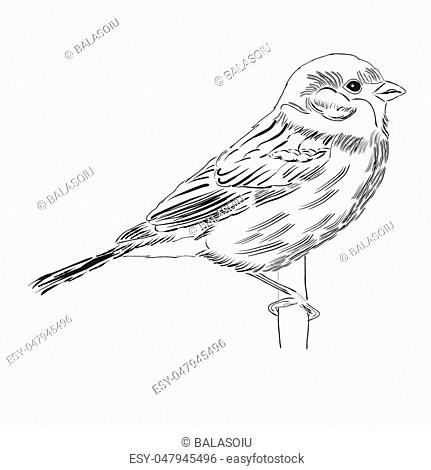 Hand drawn outline bird isolated on white background, vector format
