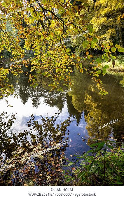 Autumn leaves on pond at Craig Dulnain