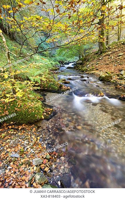 River at autumn, Selva de Irati forest, Navarra, Pyrenees, Spain