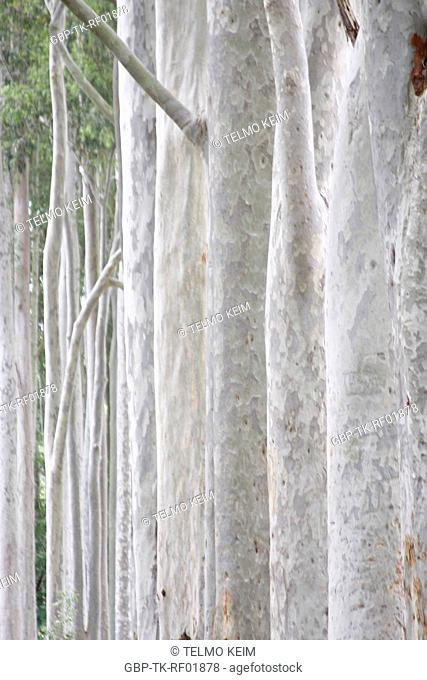 Tree trunk, São Paulo, Brazil