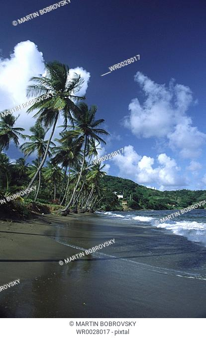 beach with palm trees and black sand