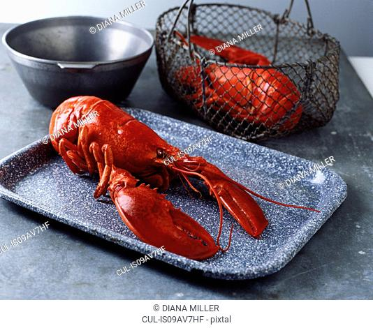 Whole fresh lobster on tray and in metal wire basket on metal