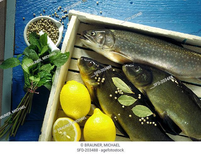 Fresh fish, lemons, white peppercorns, bay leaf, mint