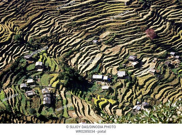 Terraced cultivation near the village Syabru Bensi in the Langtang valley, Nepal