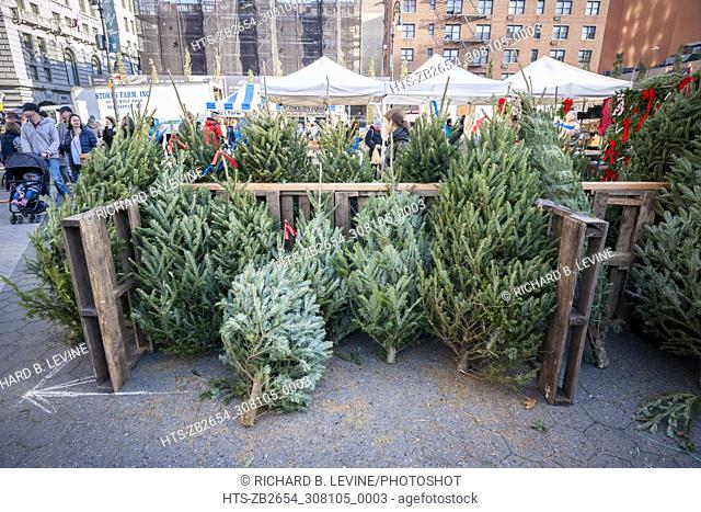 Christmas trees for sale in the Union Square Greenmarket in New York on Saturday, November 25, 2017. According to the National Christmas Tree Association a...