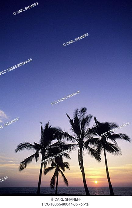 Palm trees silhouetted by bright sunset sky