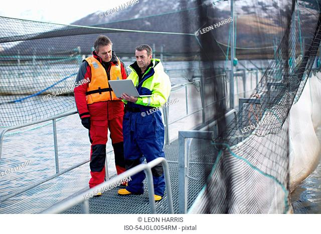 Workers using laptop at salmon farm