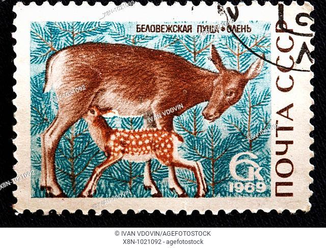 Red Deer Cervus elaphus, postage stamp, USSR, 1969