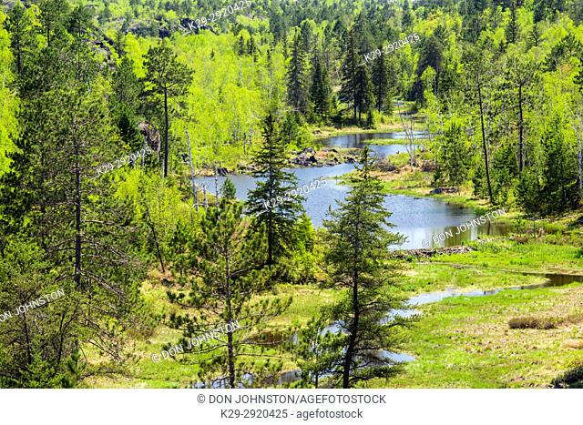 A mixed forest in spring surronds a beaver pond, Greater Sudbury, Ontario, Canada