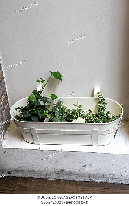 White Metal Planter Pot, Filled with Three Small Plants. Placed in a wall niche