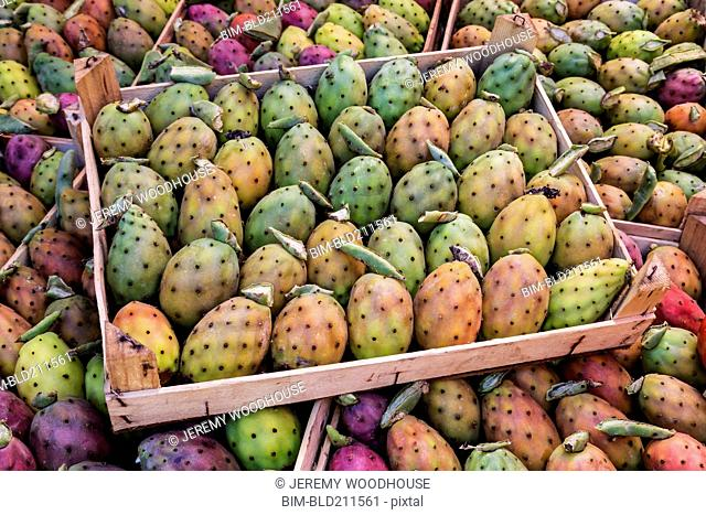 Prickly pear fruit on display at market stall, Palermo, Sicily, Italy
