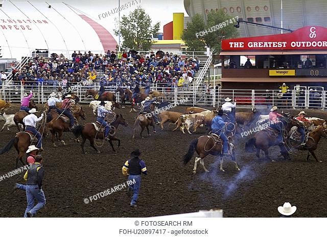 western, stampede, milking, cow, wild, calgary