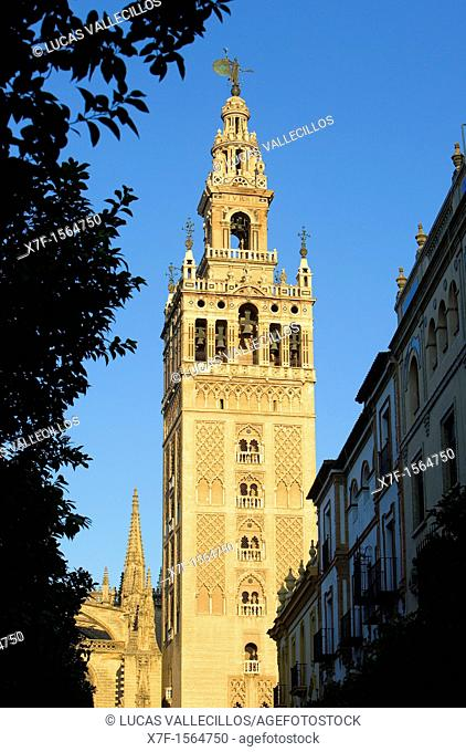 Cathedral,Giralda tower,Sevilla,Andalucía,Spain