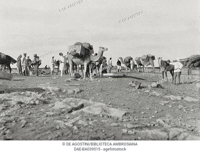 A caravan of camels in the desert: Italian archaeological mission (professors Federico Halbherr and Gaetano De Sanctis) in Cyrenaica, Libya