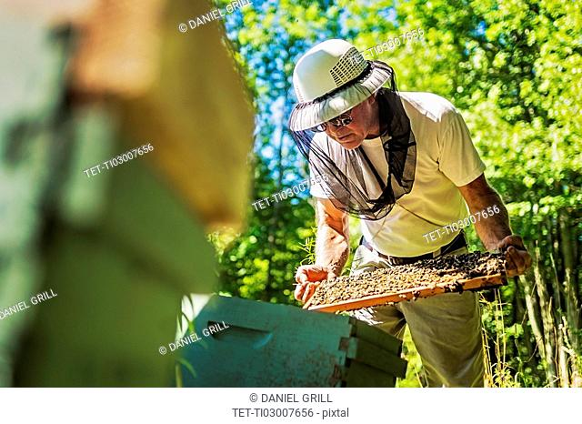Hope, Beekeeper holding honeycomb