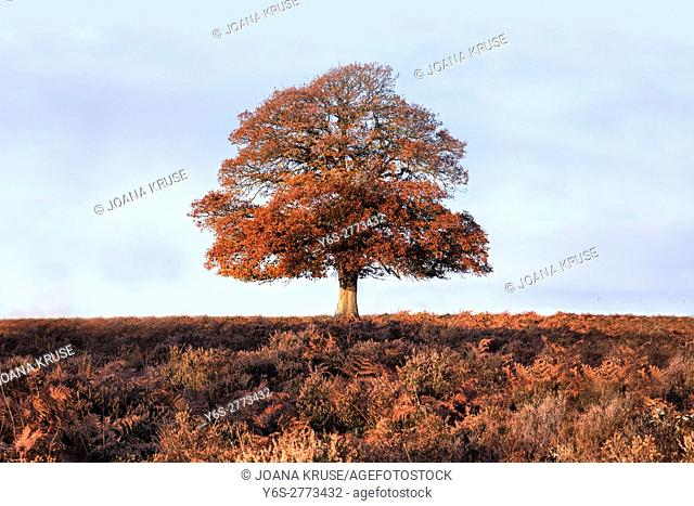 Bratley View, New Forest, Hampshire, England, UK
