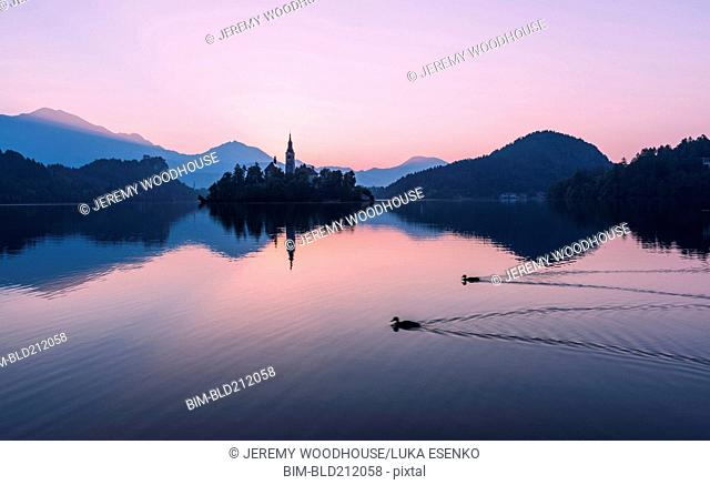 Birds swimming on Lake Bled at sunrise, Bled, Gorenjska, Slovenia
