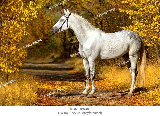 Horse standing in autumn park