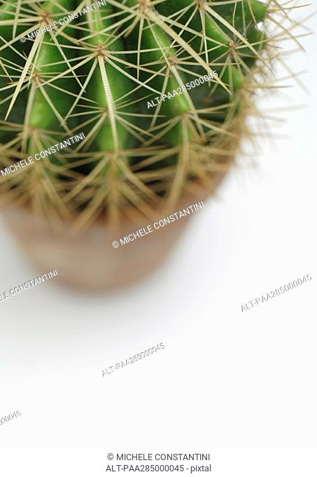 Cactus, high angle view