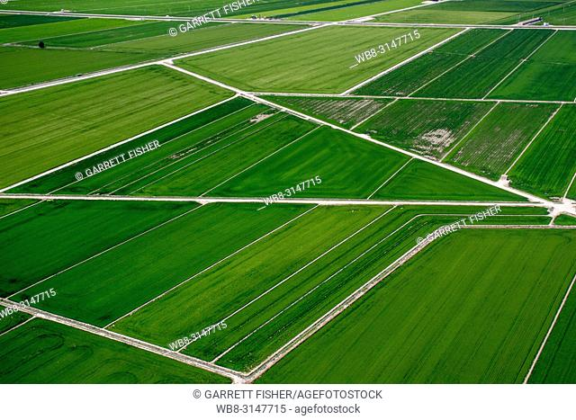 Rice Fields, Delta del Ebro, Catalunya - Aerial