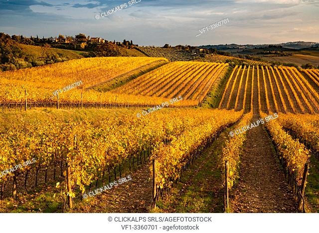 Chianti Region, Tuscany, Italy. Vineyards in autumn at sunset