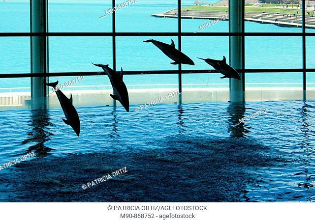 Dolphins' show in aquarium