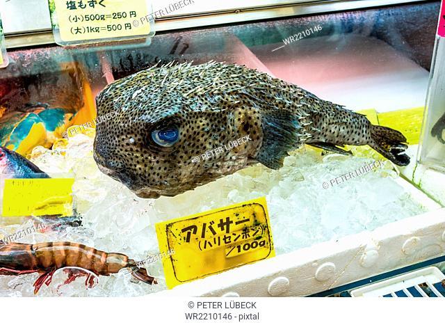 Fish at fish market in Naha, Japan