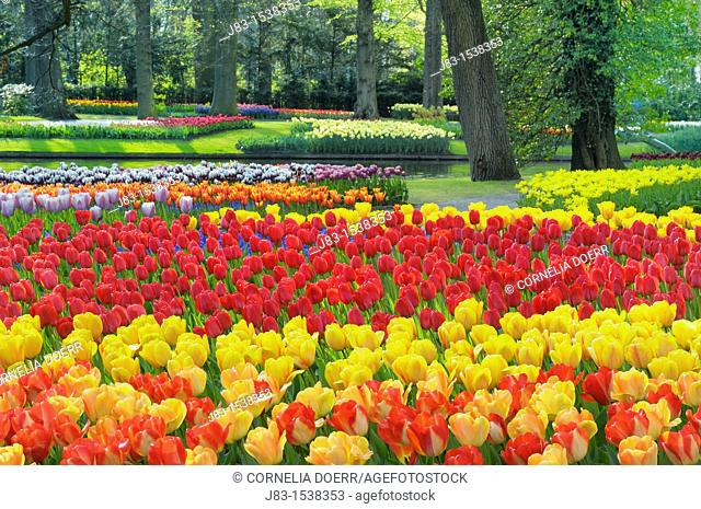 Formal garden design with Springtime flowerbeds of Tulips, Keukenhof Gardens, Lisse, Holland, Netherlands