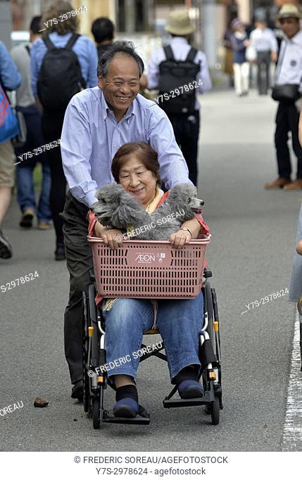 Japanese man pushing senior woman in wheelchair holding small dogs, Takayama, Japan, Asia