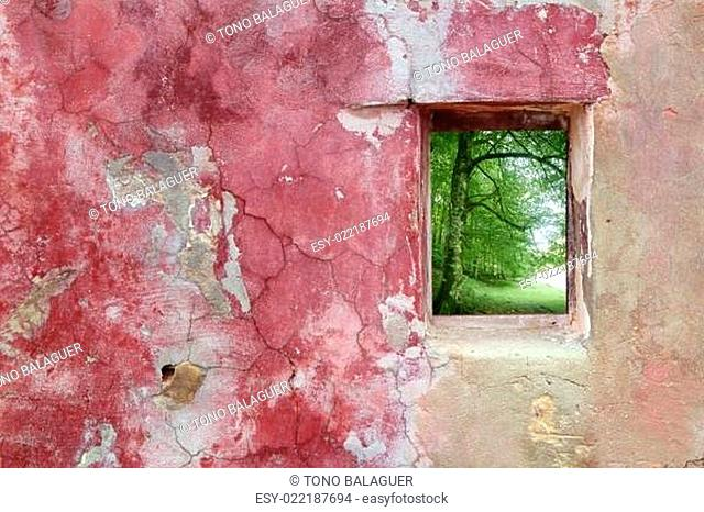 aged weathered pink wall window beech forest