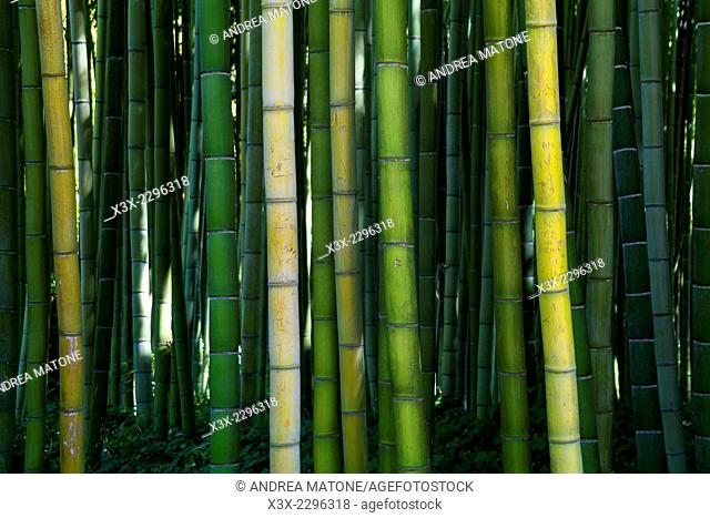 Bamboo forest. Garden of Ninfa. Italy