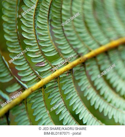 Close up of leaves growing on plant