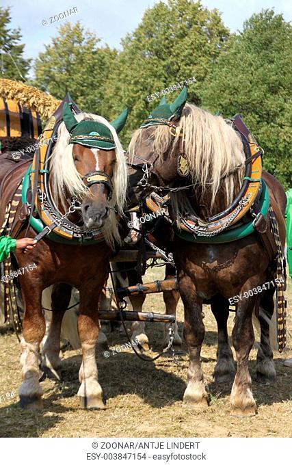 workhorses