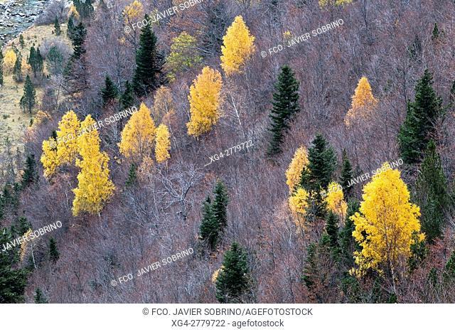 Bosque mixto caducifolio. Valle de Ordesa. Parque Nacional de Ordesa y Monte Perdido. Torla. Sobrarbe. Huesca. Pirineo Aragones. Aragon. España