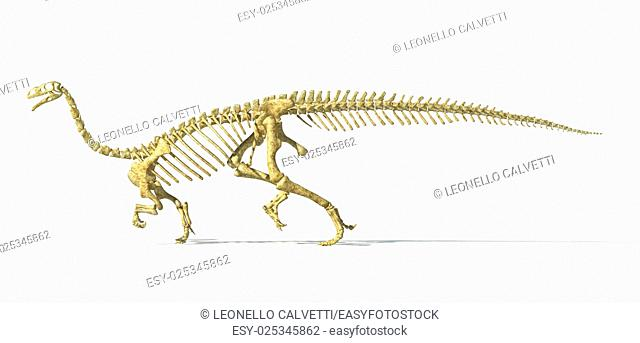 Plateosaurus dinosaur, full photo-realistic skeleton, scientifically correct. SIde view On white background. WIth drop shadow and clipping path included