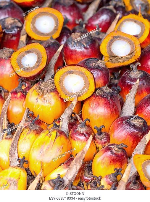 Background of Palm Oil Fruits in Thailand