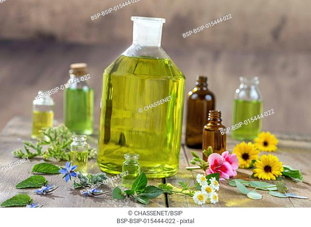 Herbal therapy and aromathrapy concept: alternative treatment with fresh medicinal herbs and flowers on old cracked paint wooden background