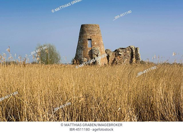 Ruins of a windmill, remains of the Abbey of St. Benet, Ludham, Norfolk boards, Norfolk, England