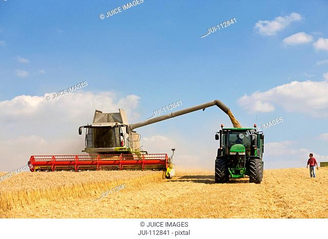 Farmer watching combine harvester fill tractor trailer in golden barley field