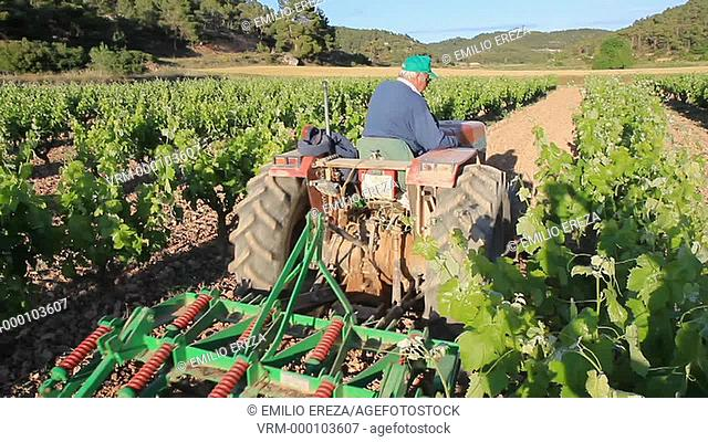 Tilling the vineyard. Lleida, Catalonia, Spain